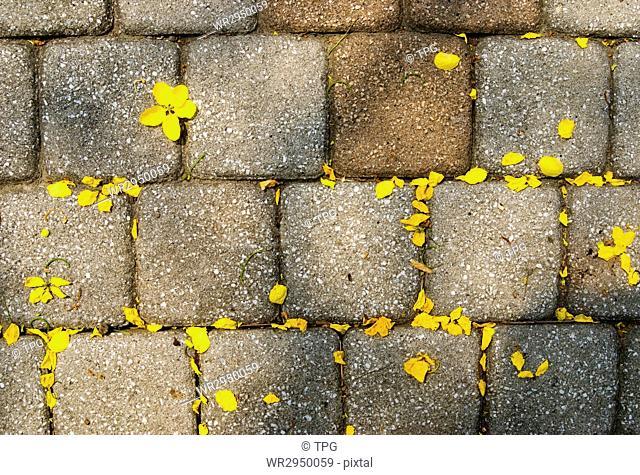 Yellow petals drop on walkway