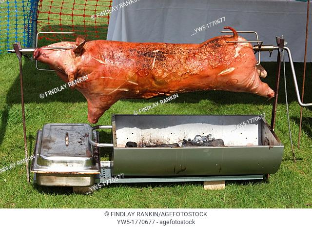 Whole pig, butchered and being roasted over an open spit barbeque, Open Fair, Dundonald, Ayrshire, Scotland, UK