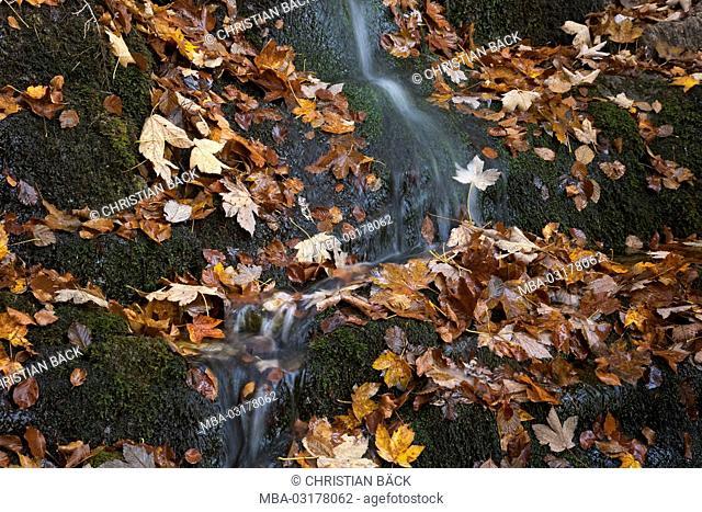 Waterfall on the way to the Herzogstand mountain, Bavarian Alpine Foreland, Alpine foreland, alps, Bavarian uplands, Upper Bavaria, Bavaria, South Germany