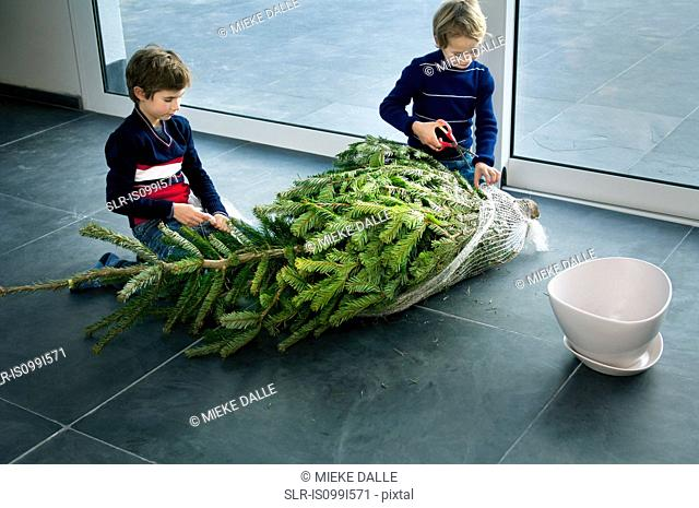 Boys preparing Christmas tree at home