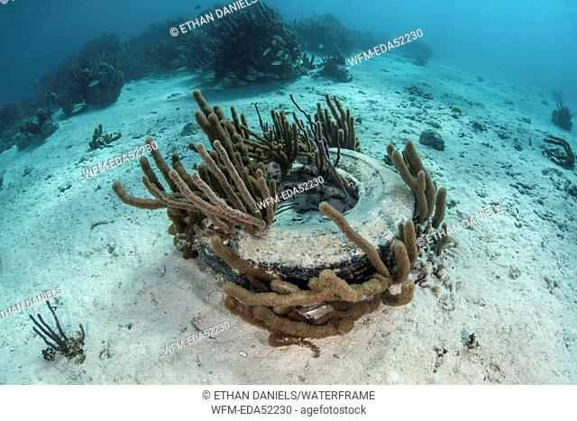 Abandoned Tire in Coral Reef, Turneffe Atoll, Caribbean, Belize