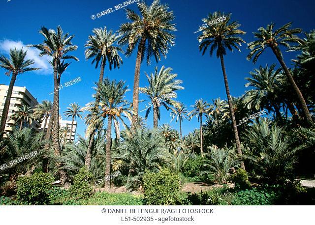 El Huerto de San Plácido. Palmeral. Elche. Alicante province. Spain
