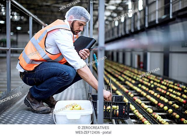 Man sorting out apples in food processing plant