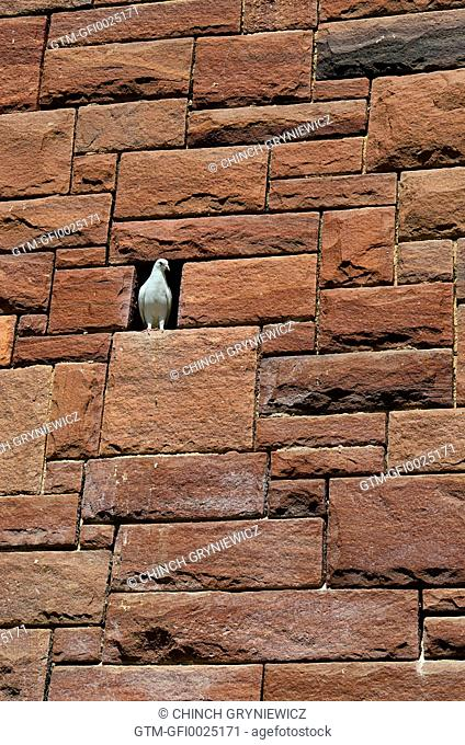 White Dove on Massive Wall
