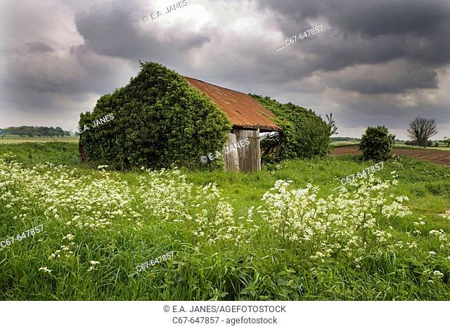 Ruined Barn. Fields. Norfolk. UK