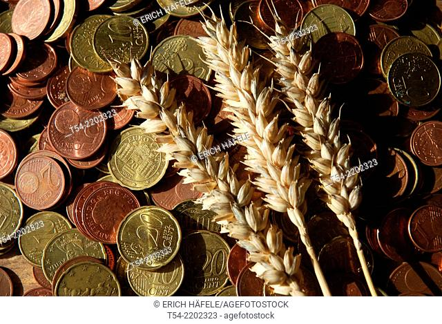 Wheat ears lying on euro cent coins