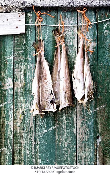 Fish hanging to dry, Narsaq, South Greenland