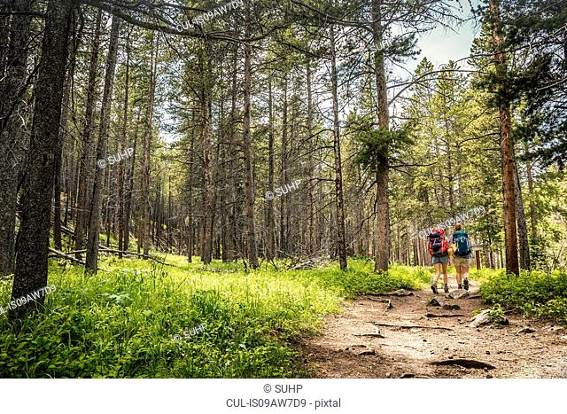 Rear view of teenage girl and young female hiker hiking in forest, Red Lodge, Montana, USA