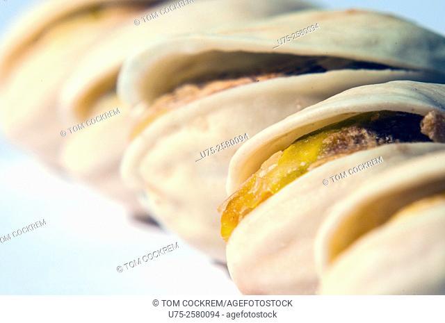 Pistachio nuts in shell in studio setting