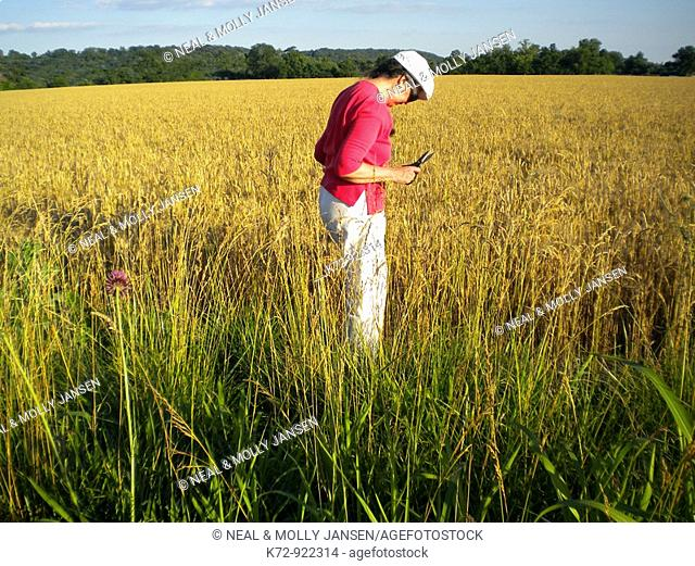 Woman looking at wheat field