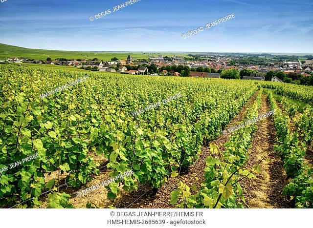 France, Marne, Vertus, Cote des Blancs, vineyard in champagne classified Premier Cru with a village in the background