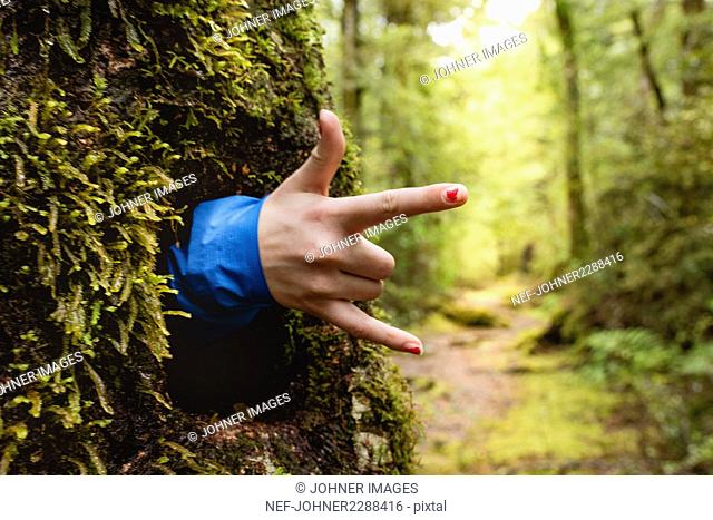 Hand emerging from hole in tree trunk