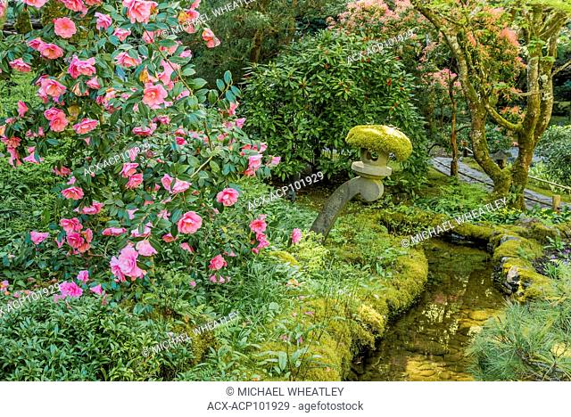 Stone lantern and camelia bush, Japanese Garden, Butchart Gardens, Brentwood Bay, near Victoria, British Columbia, Canada
