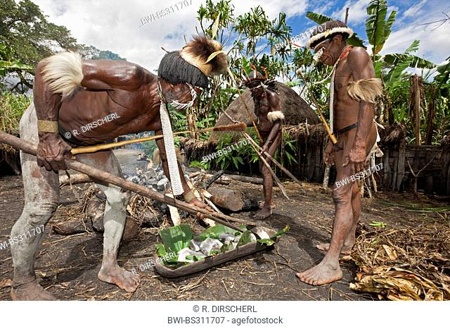Dani men preparing an earth oven for the rare pigs feast, the pinnacle of the social and religious life, Indonesia, Western New Guinea, Baliem Valley