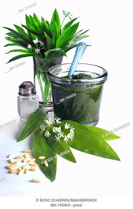 Ramsons, Wild Garlic or Bear's Garlic (Allium ursinum) leaves, flowers and pesto