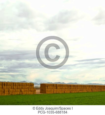Long Line of Hay Bales