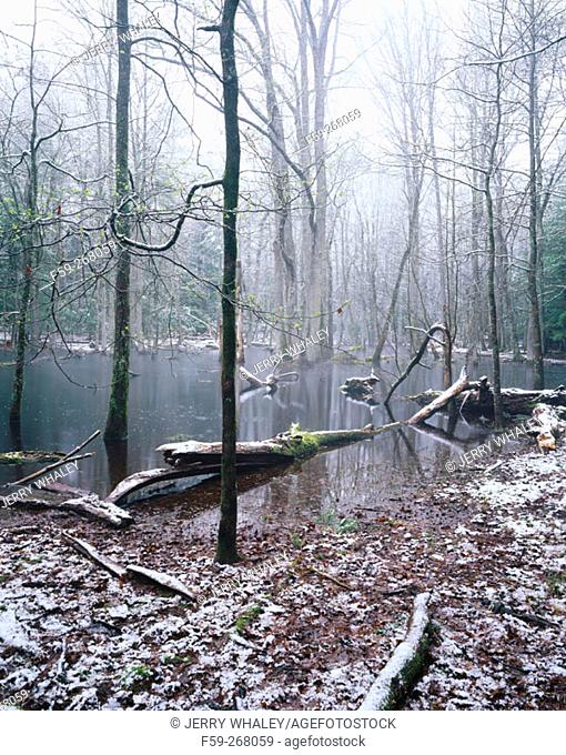 Bog. Cades Cove. Great Smoky Mountains National Park. Tennessee. USA