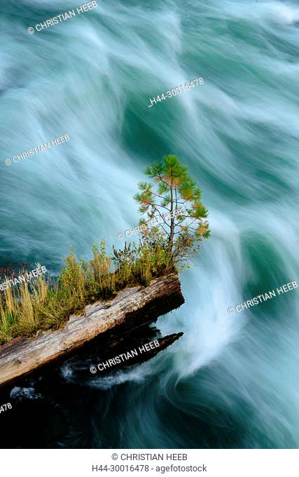North America, USA, Oregon, Pacific Northwest, Central Oregon, Bend, Deschutes River, Pine tree on log