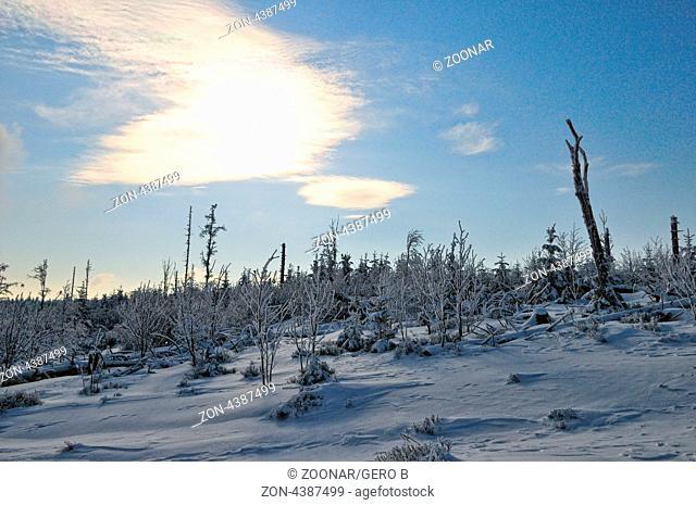 Winterwald, Winter forest