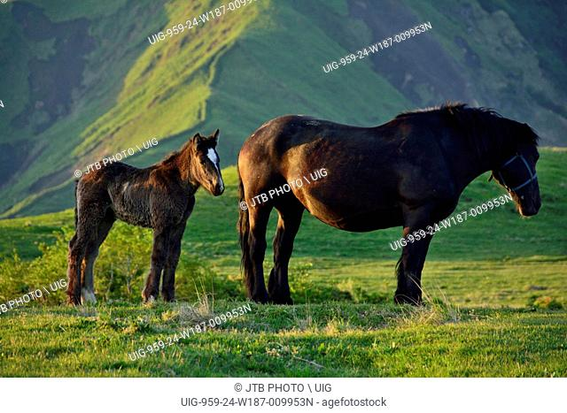 Japan, Kyushu Region, Kumamoto Prefecture, Aso, Horses standing on grass and Mount Aso in background