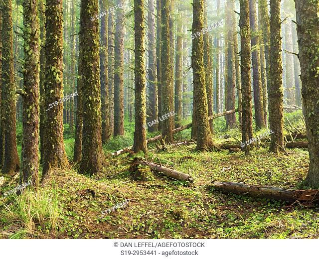 Cape Perpetua Forest Oregon. USA