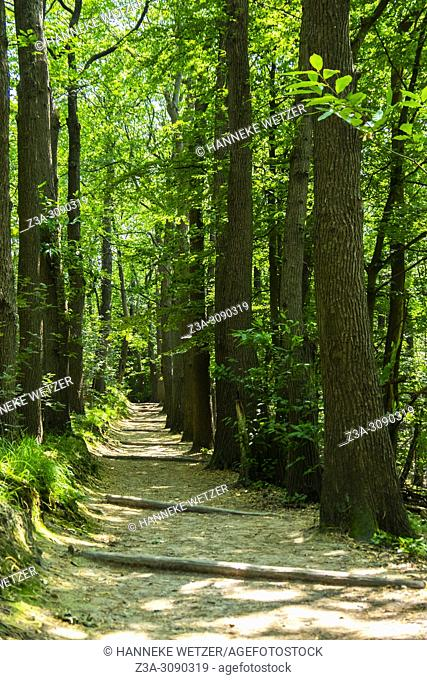 Berg en Dal, Netherlands. Forest trees and undergrowth inside a forest during summer season with backlight