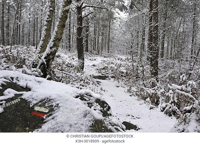 marked hiking trail at the Rochers d'Angennes site, Forest of Rambouillet in the snow near Poigny-la-Foret, , Haute Vallee de Chevreuse Regional Natural Park