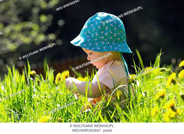Baby girl wearing hat sitting on meadow picking dandelions
