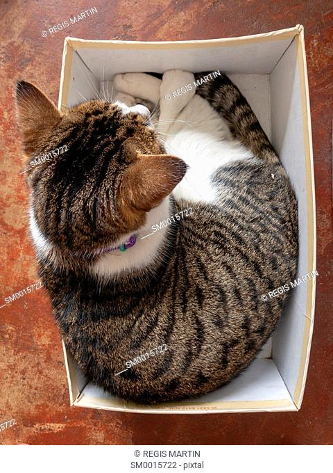 Overview of a cat in a shoe box