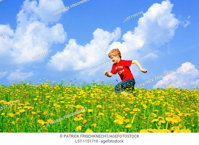 boy running through field of Dandelions,Zuercher Oberland, Zuerich, Switzerland