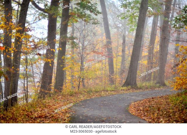 Autumn in very soft focus, Pennsylvania, USA