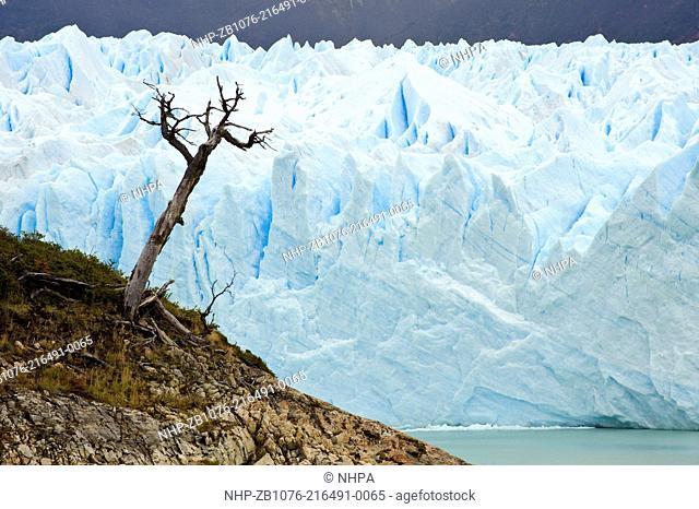 Perito Moreno Glacier, Glaciares National Park, Argentina The Perito Moreno Glacier is one of only three Patagonian glaciers that are not retreating Los...