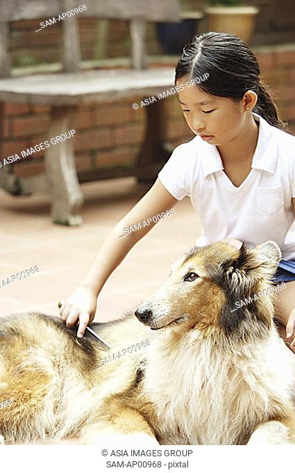 Girl grooming dog
