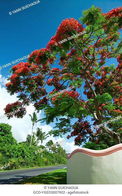 Belle Mare - Mauritius Island