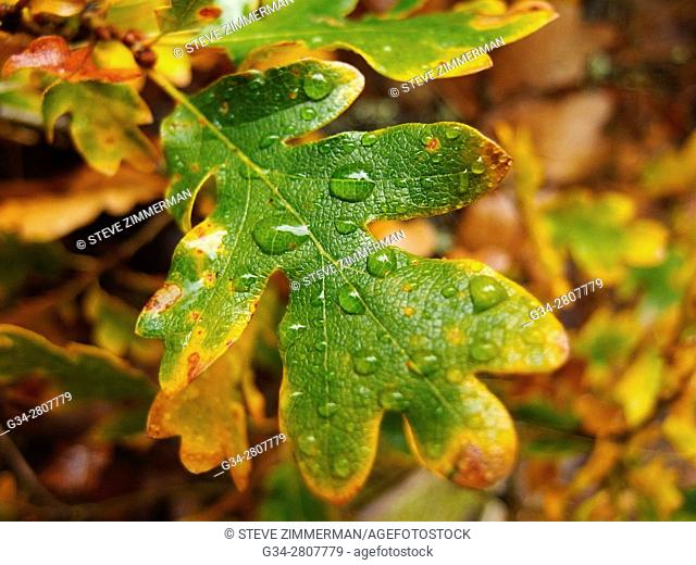 Hydrated Leaves