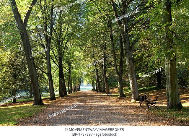 Avenue of trees, Botanical Garden Romberg Park, Dortmund, Ruhr area, North Rhine-Westphalia, Germany, Europe