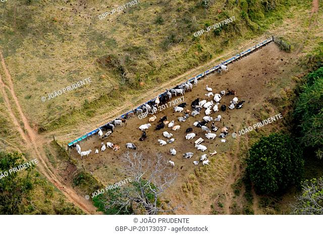 Aerial view of cattle ranching on rural property in the Serra da Mantiqueira, Itapira, São Paulo, Brazil, 07.2016