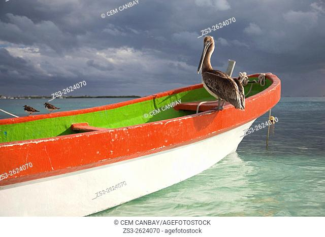 Pelican and other birds sitting on a colorful fishing boat at the beach, Isla Mujeres, Cancun, Quintana Roo, Yucatan Province, Mexico, North America