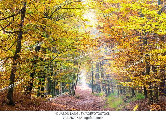 Hoge Kempen National Park in autumn, Limburg, Vlaanderen (Flanders), Belgium