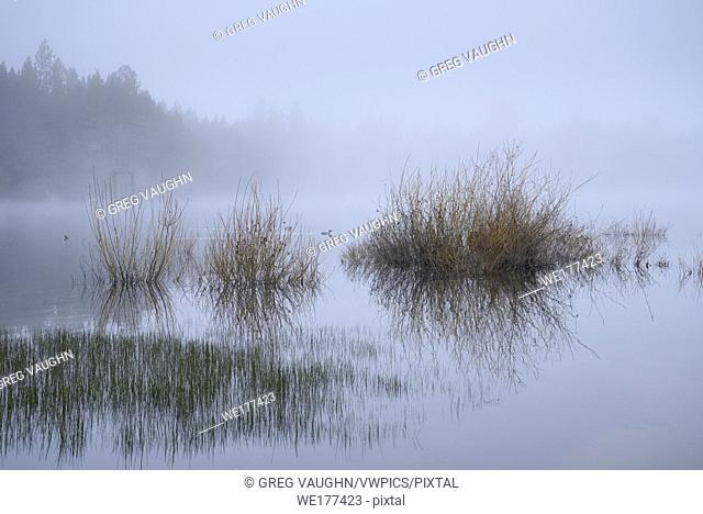 Grasses, Merganser, and morning fog on the lake at Crane Prairie Reservoir, Deschutes National Forest, Central Oregon