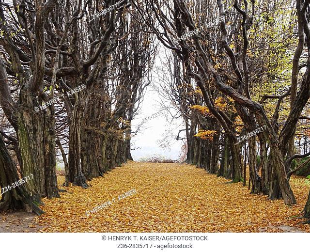 Valley of trees at fall, Mogilany Park, Poland