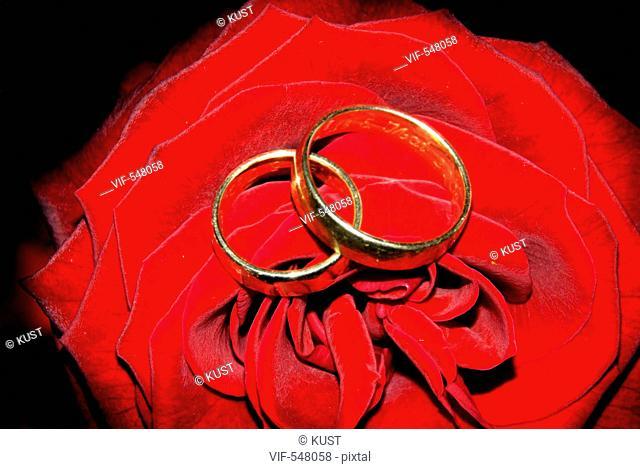 Eheringe eingebettet in eine rote Rose. - 06/05/2007