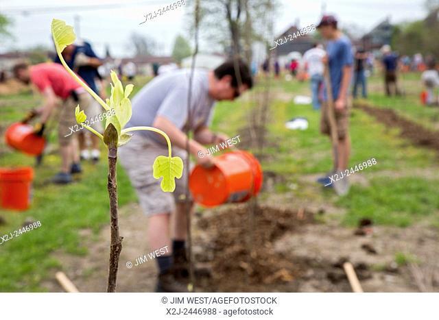 Detroit, Michigan - Volunteers plant 5,000 tulip poplar trees, part of Hantz Woodlands' plan to develop a 150-acre urban tree farm on vacant land