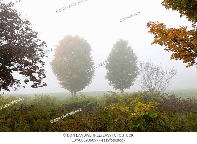Two trees in the fog, Stowe, Vt, USA