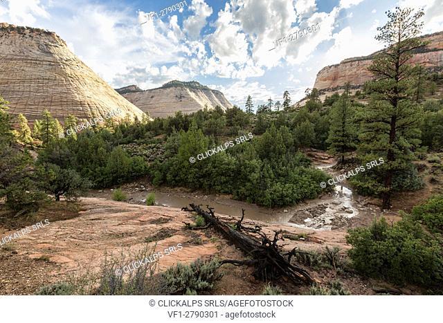 Landscape from Zion Canyon Scenic Drive. Zion National Park, Hurricane, Washington County, Utah, USA