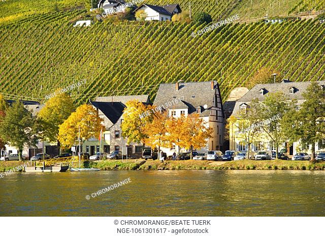 old Piesport on the Moselle in autumn