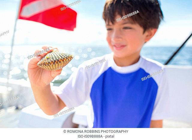 Boy examining scallop on boat, dive flag in background, Gulf of Mexico, Homosassa, Florida, US