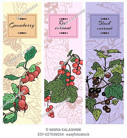 Set of berries. red currant, black currunt, gooseberry. Hand drawn vector illustration banners