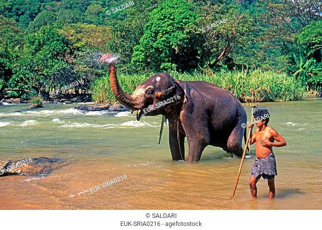 Elephant taking its shower, Sri Lanka
