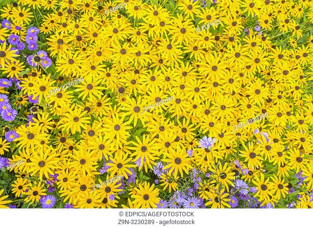 blue and yellow flowers, top view, baden-wuerttemberg, germany
